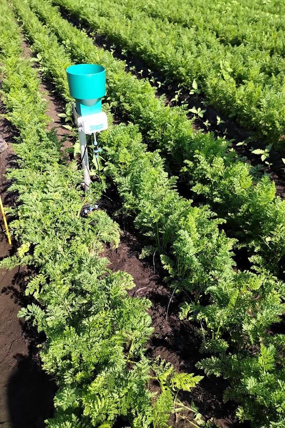 Aquacheck Probe With Nutrisens Probe And Rhizon On Organic Carrots