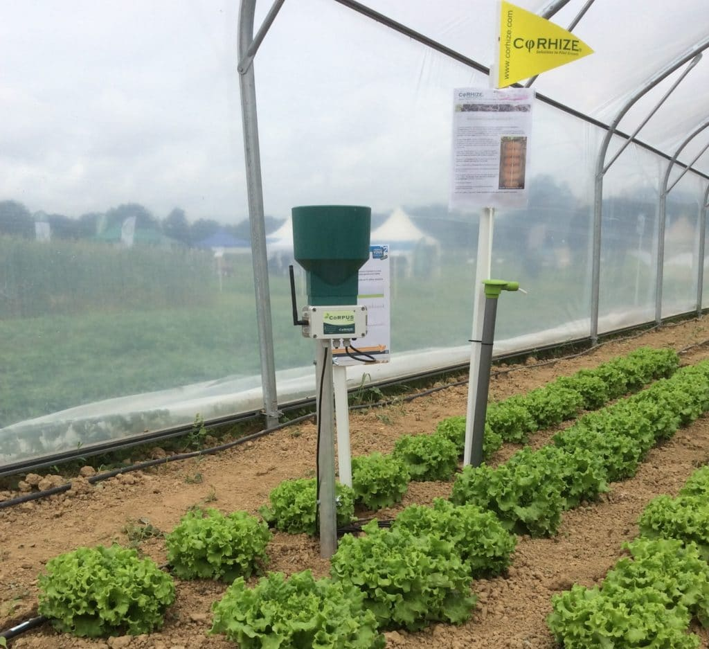 Sonde Aquacheck Sur Salades Cadrées Bis